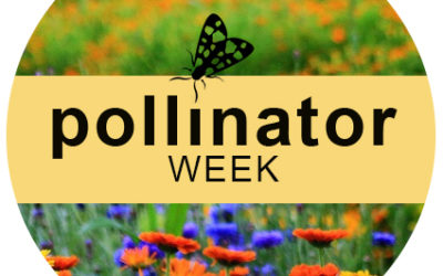 Celebrate National Pollinator Week!