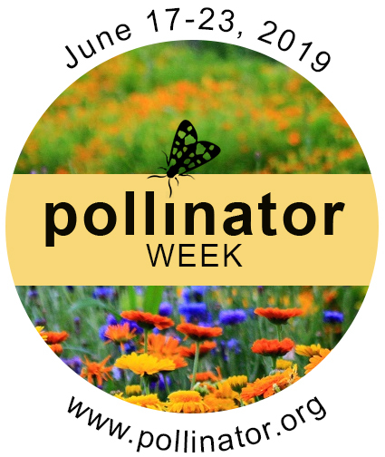 Celebrate National Pollinator Week!