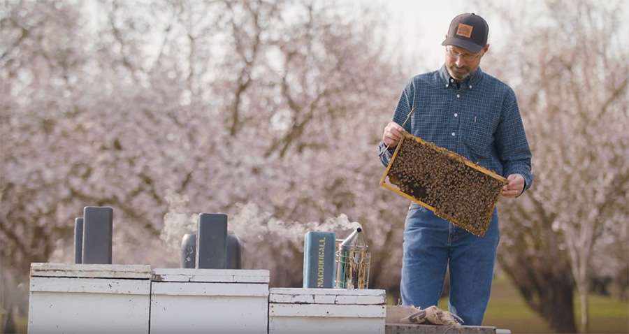 BeeWhere – GIS Technology Works to Protect Bees and Almonds
