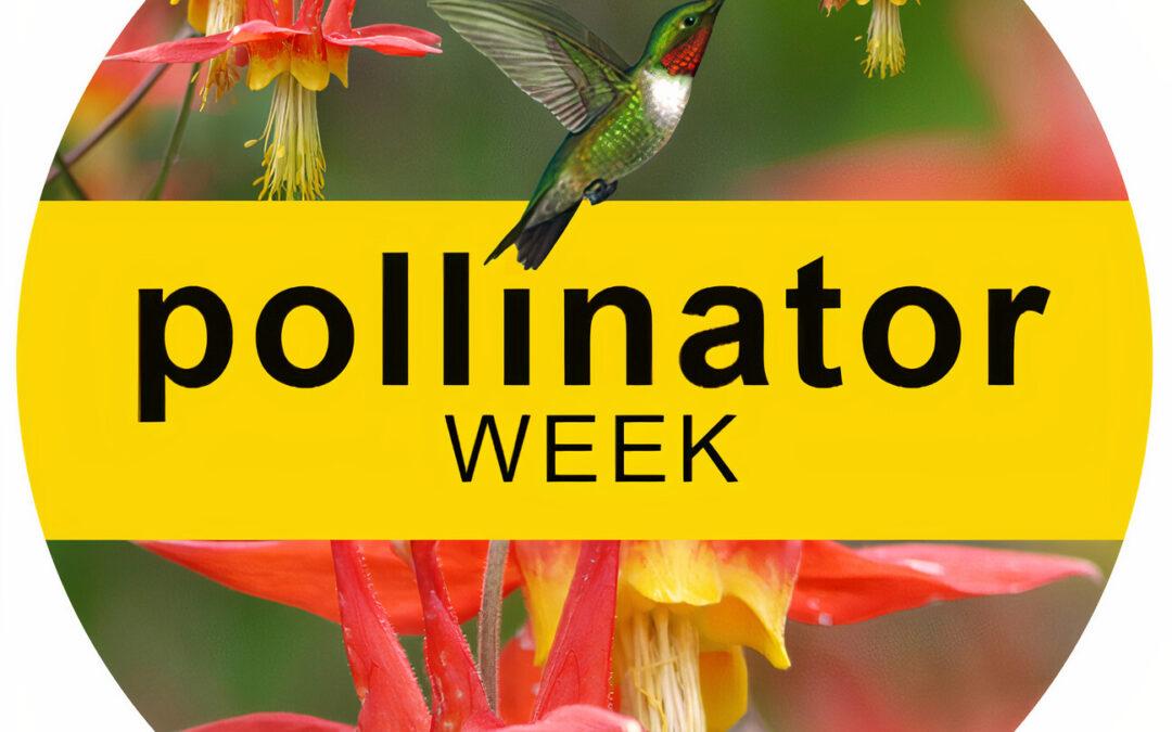 Take Part in Pollinator Week!